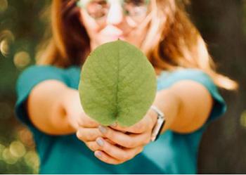 grünes blatt umwelt